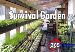 survival garden with 365preppers.com